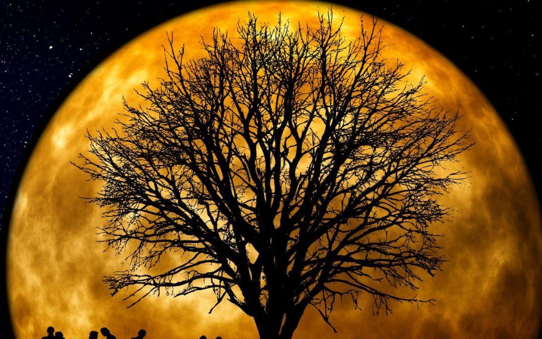 Feral: A Novel of Werewolf Horror by Matt Serafini